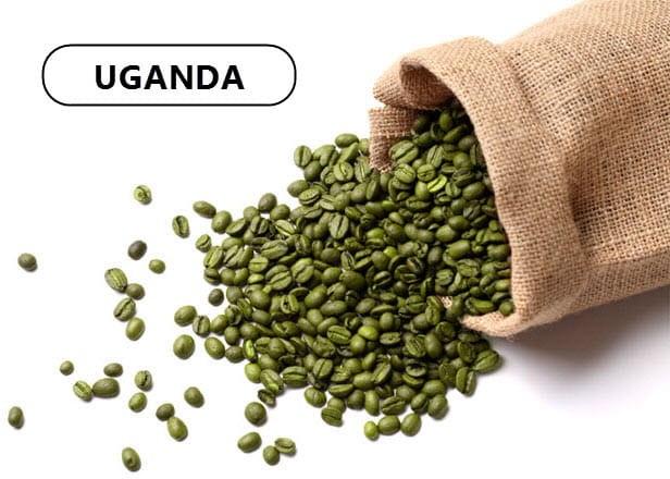 Зеленый кофе из Уганды