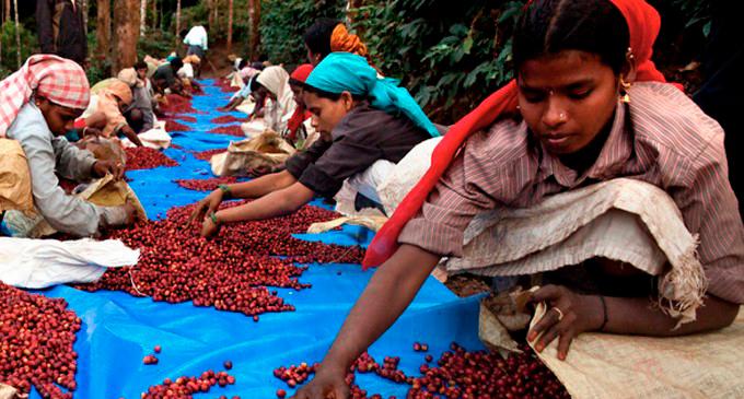 Индийский кофе: история