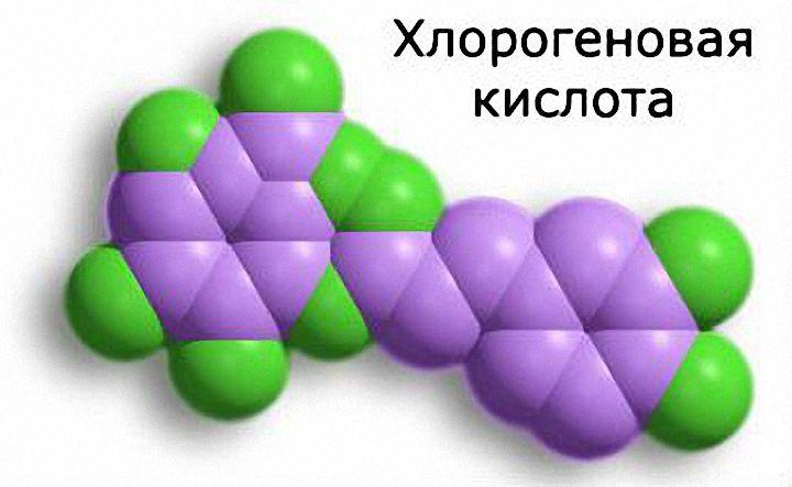Хлорогеновая кислота и похудение