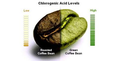 Химический состав зеленого кофе