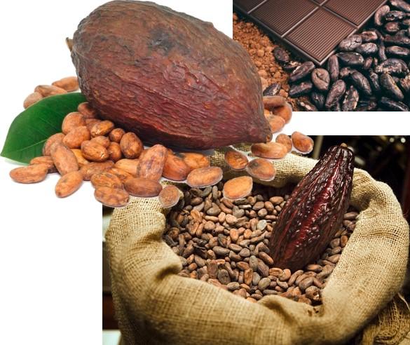 Способы употребления какао-бобов